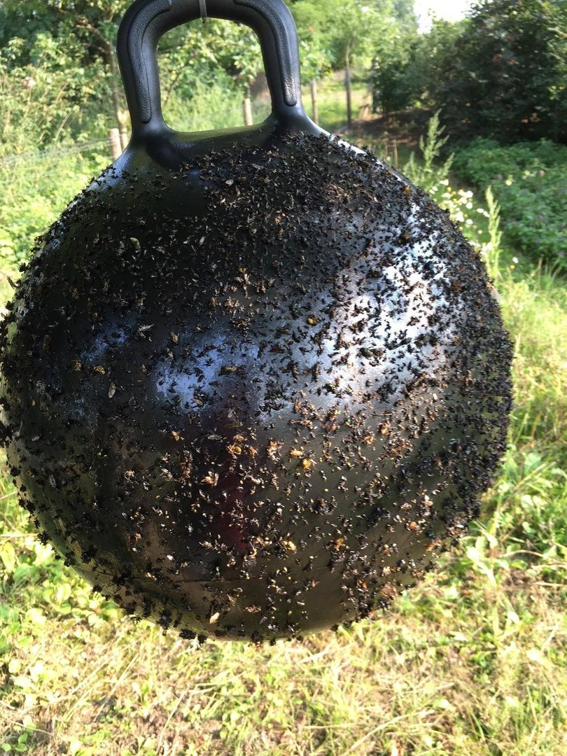 Animal Care Bremsen / Fliegenfalle  ---- Horse Fly Trap Ball ----